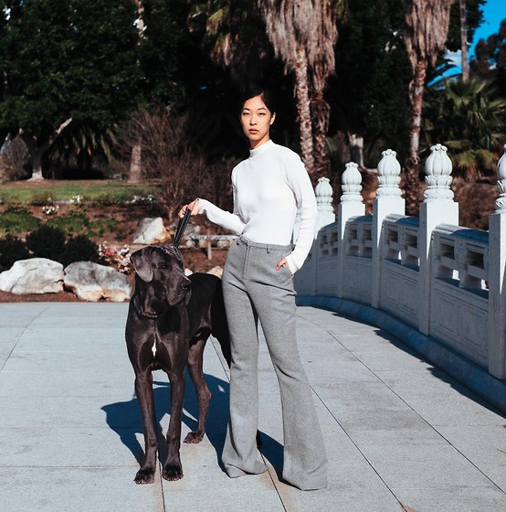 Cissy Zhang -  - The Great Dane